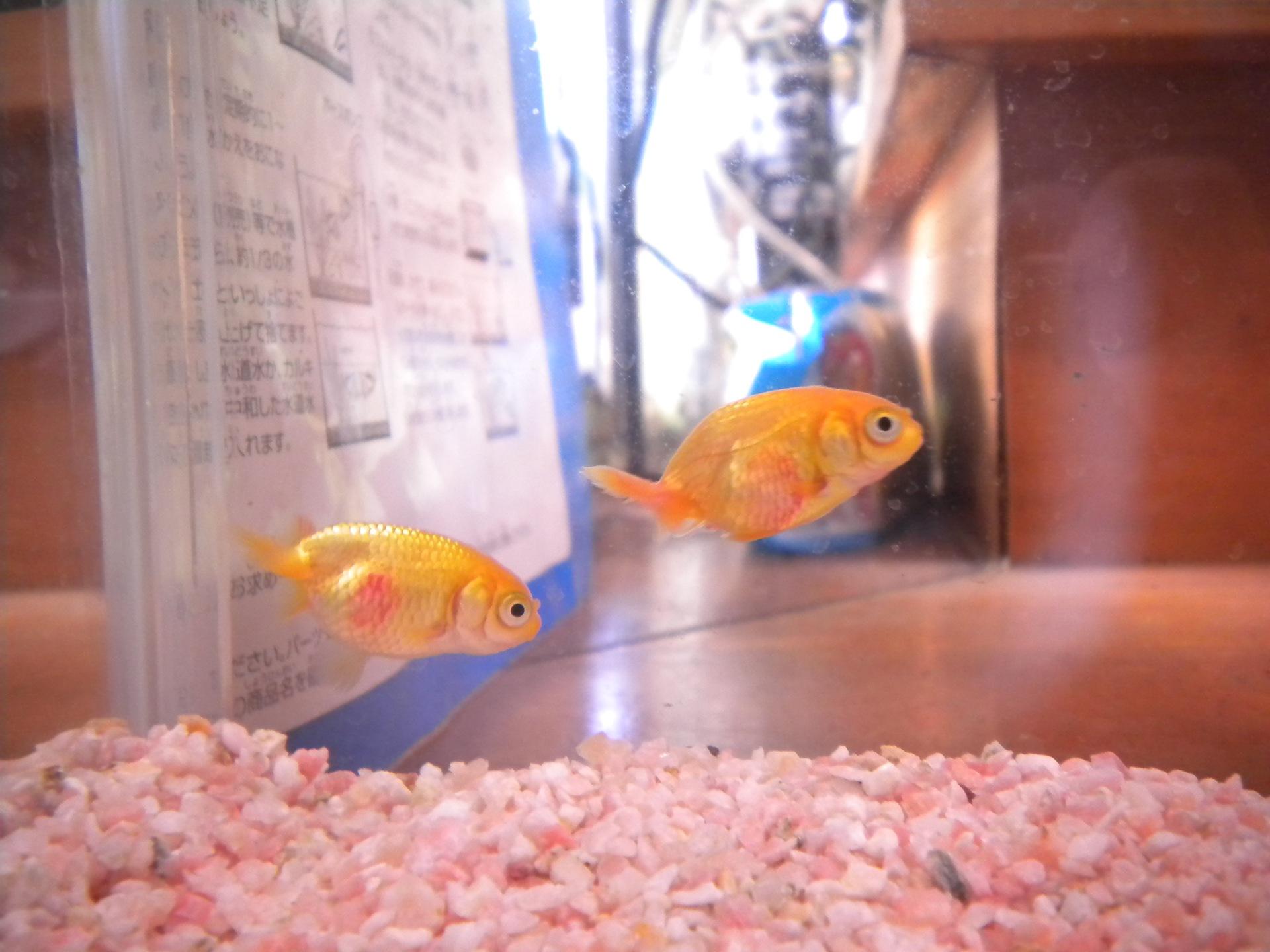 長い??一日(1):金魚の治療