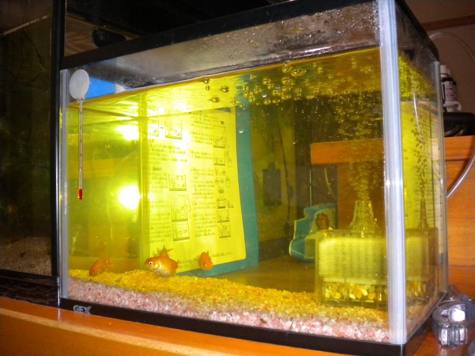 金魚の治療とサワガニついて
