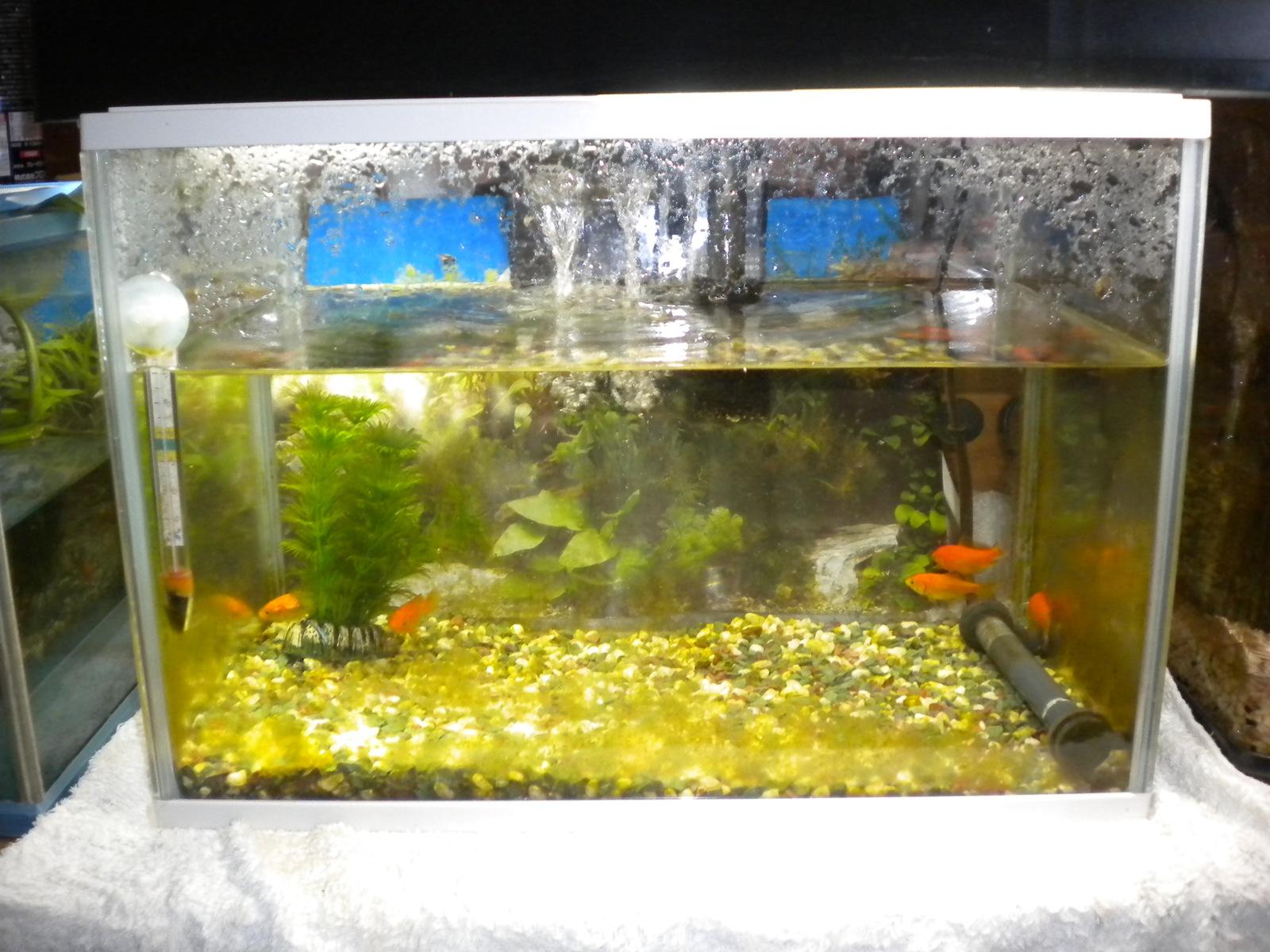 金魚の世話:101226