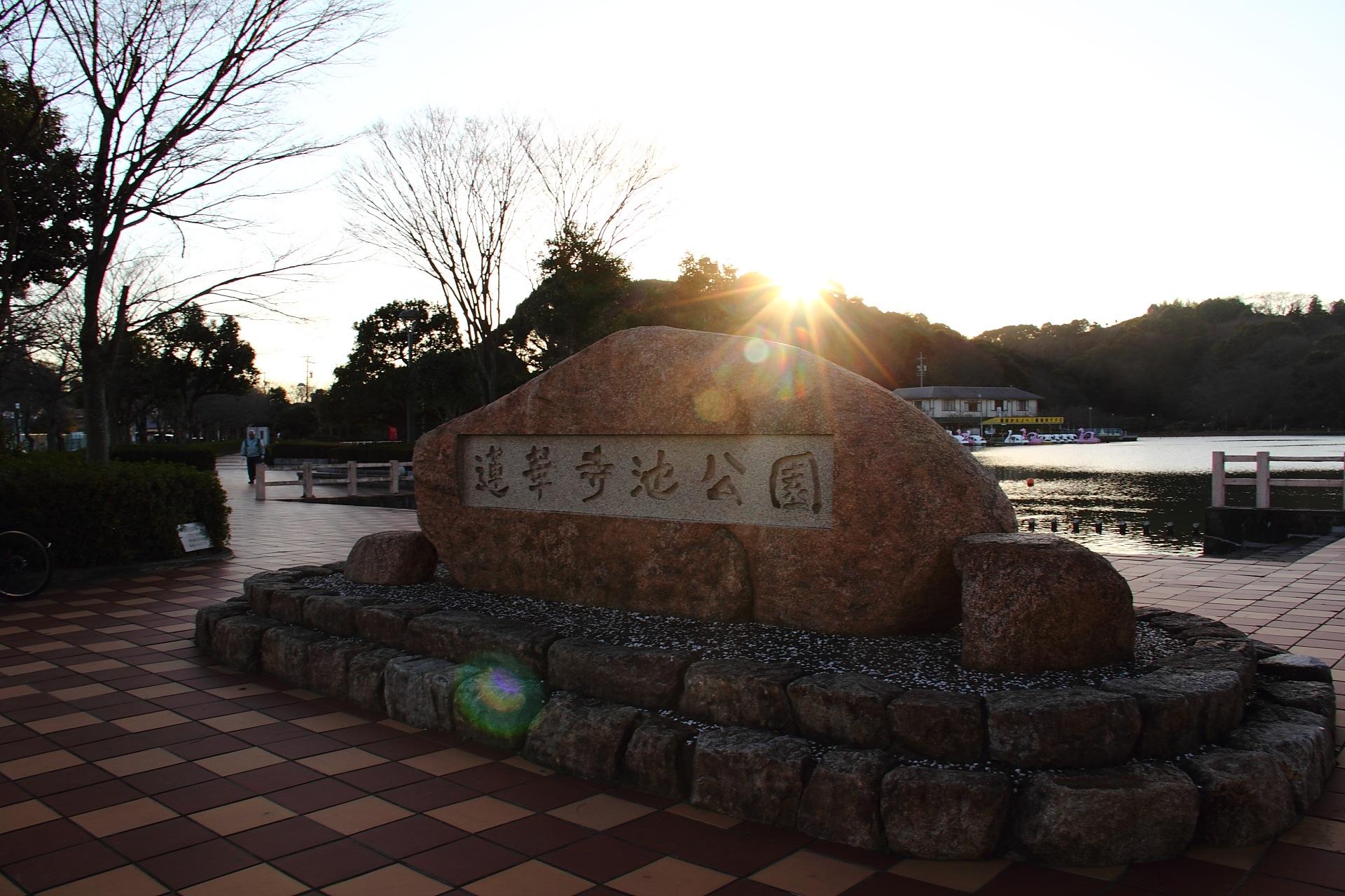 休日記[21] – 蓮花寺池公園・青葉通りのイルミネーション