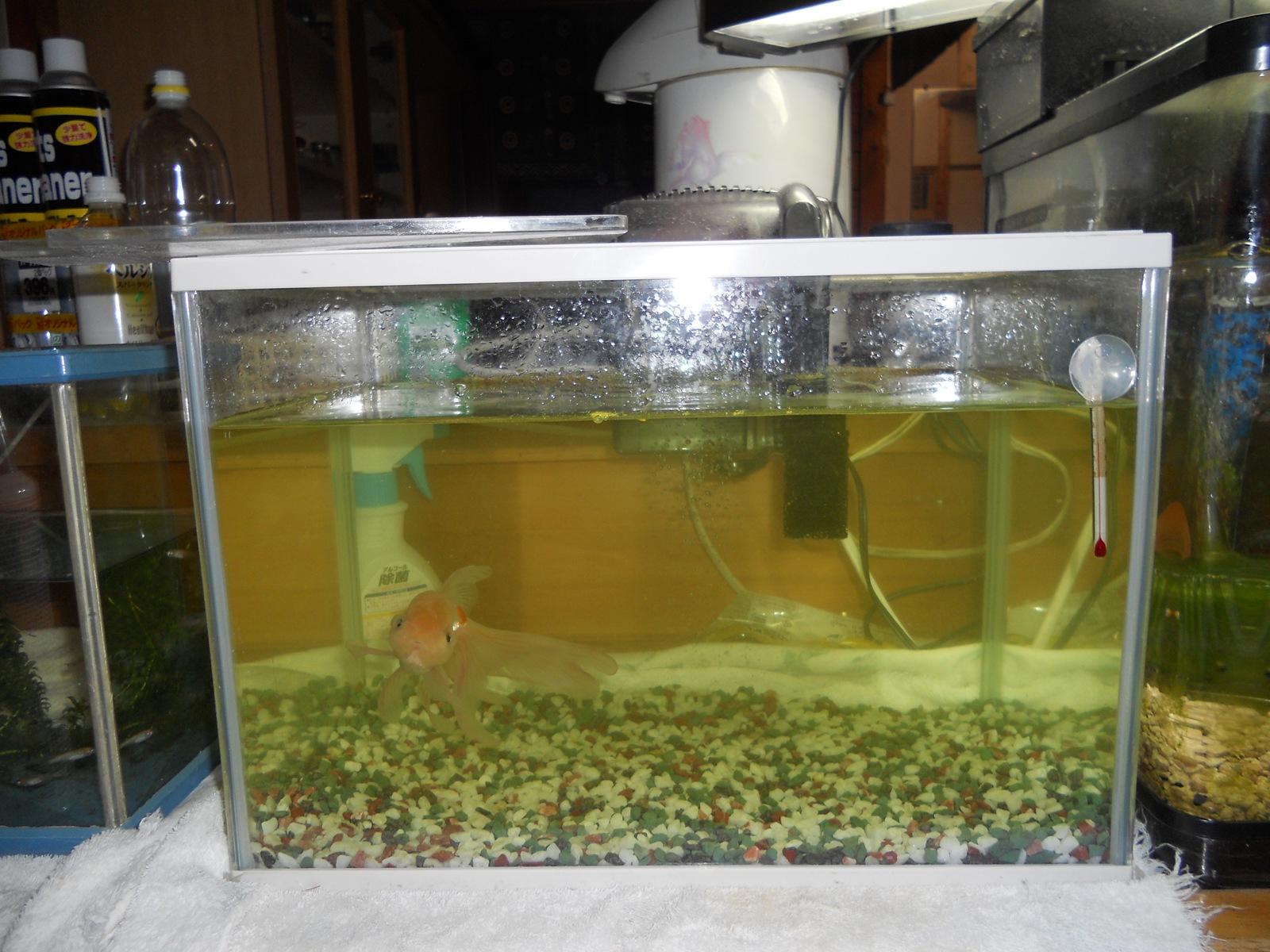 顆粒 グリーン f ゴールド グリーンFゴールドは水1ℓに対して規定量はどれだけですか?