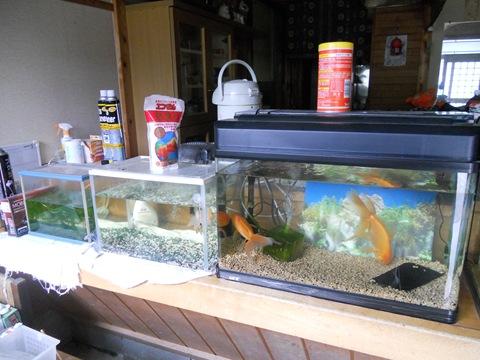 GW7日目:11.05.05:金魚のお世話!