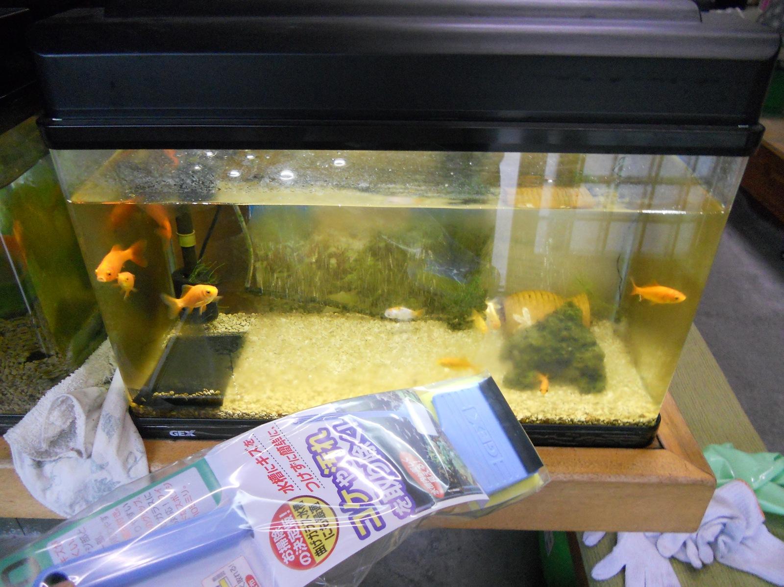 金魚の水槽掃除用品と野菜の入った健康そうな?エサ購入~:11.06.05