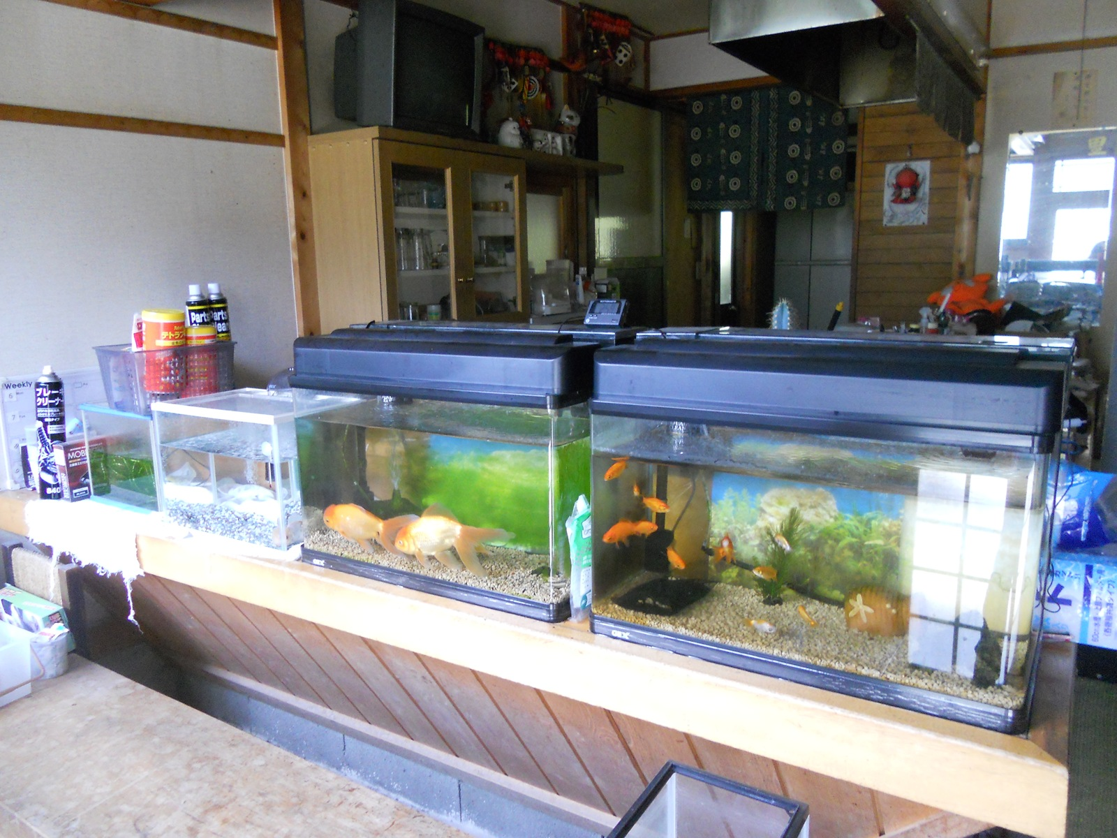 金魚の水槽掃除!:11.06.22