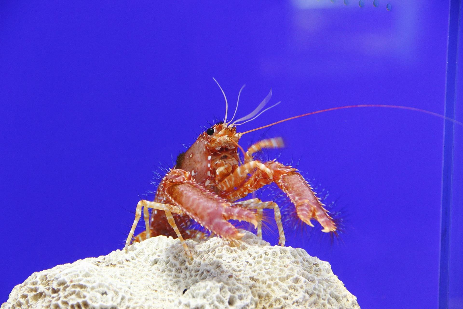 休日記[28] – 東海大学海洋科学博物館・自然史博物館