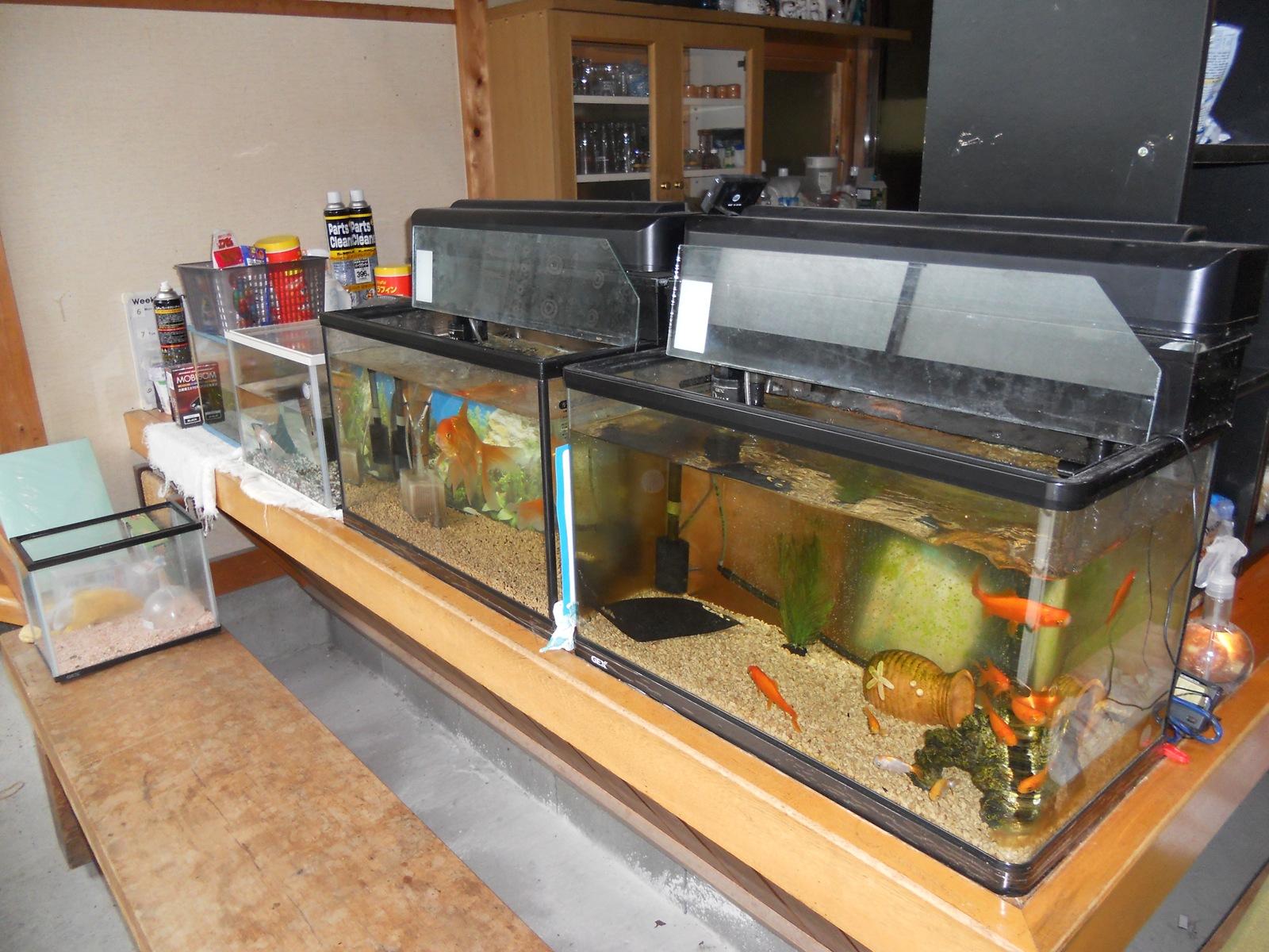 金魚の水槽の水替えとフィルタ交換:11.07.06