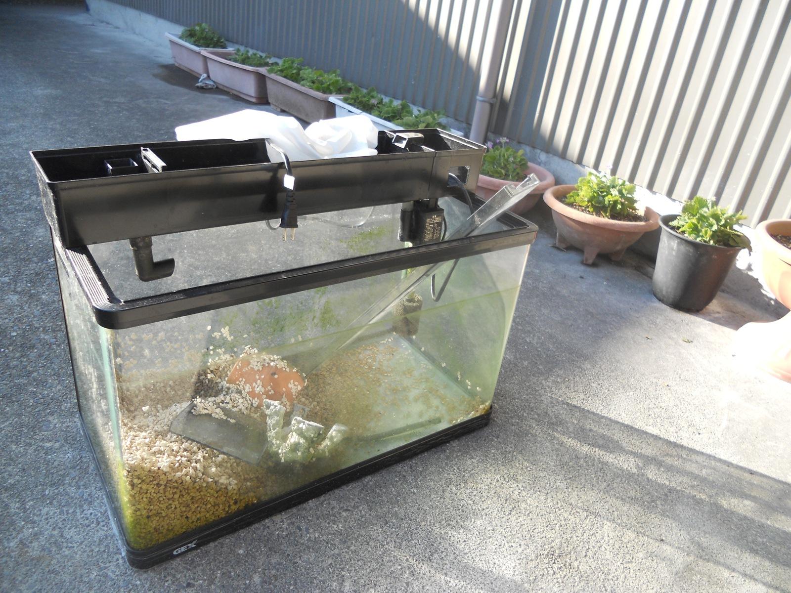 2011年の年末大掃除[7] – 金魚の水槽のこびり付いたコケ掃除
