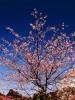 春の風景撮影