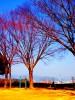 八幡山(やはたやま)公園