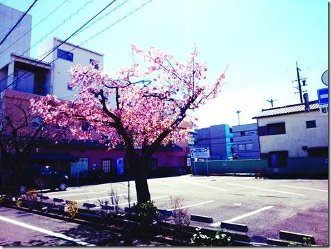 2014-03-21-12-59-52_deco