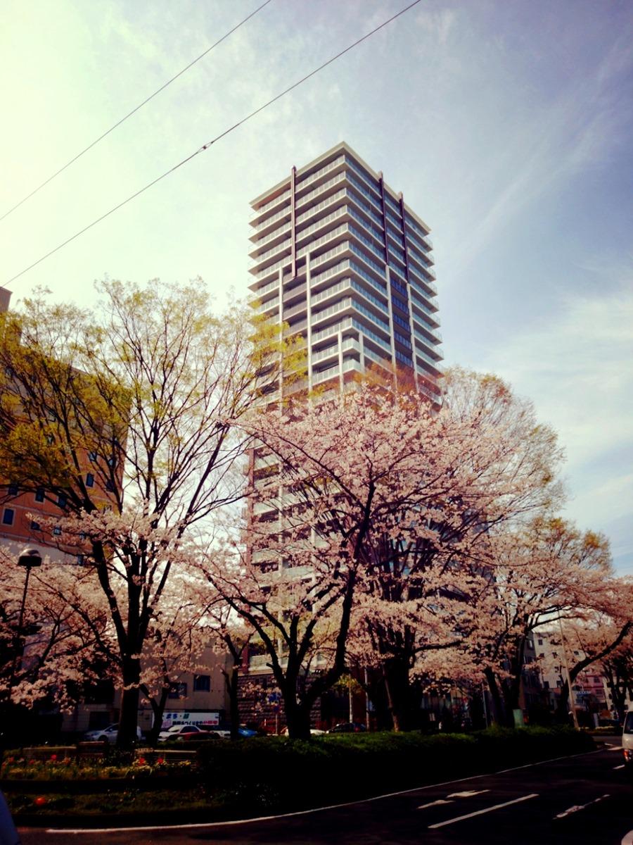 桜の咲く季節だからだろうか?