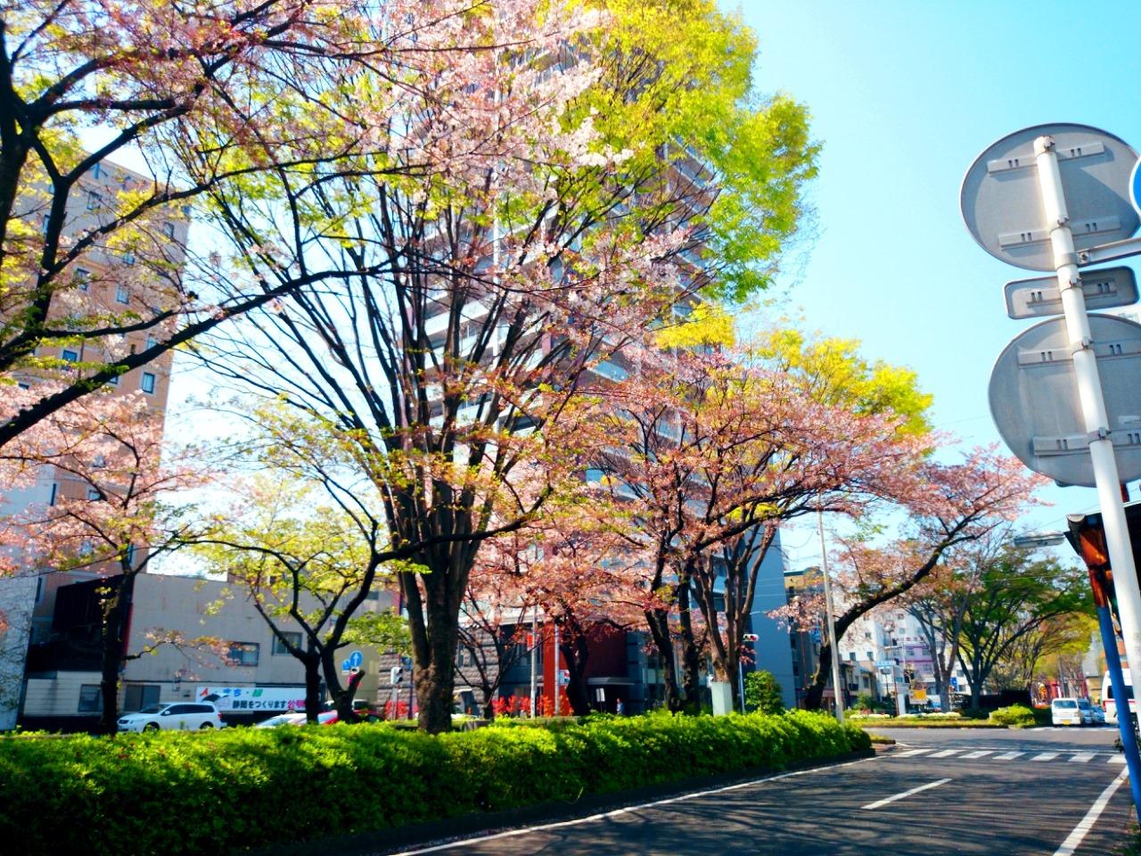 徐々に徐々に桜も・・・